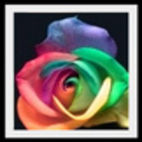 Colorful_rose